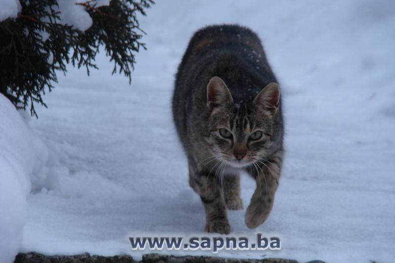 Pregedate slike iz ?lanka: Psi, ma?ke, snijeg (foto, video)