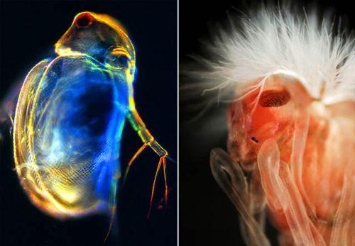 Pregedate slike iz članka: Slike uslikane uz pomoć mikroskopa