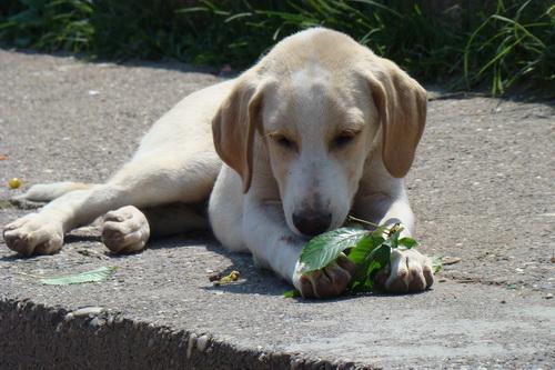 Pregedate slike iz ?lanka: Najpoznatiji pas u Sapni