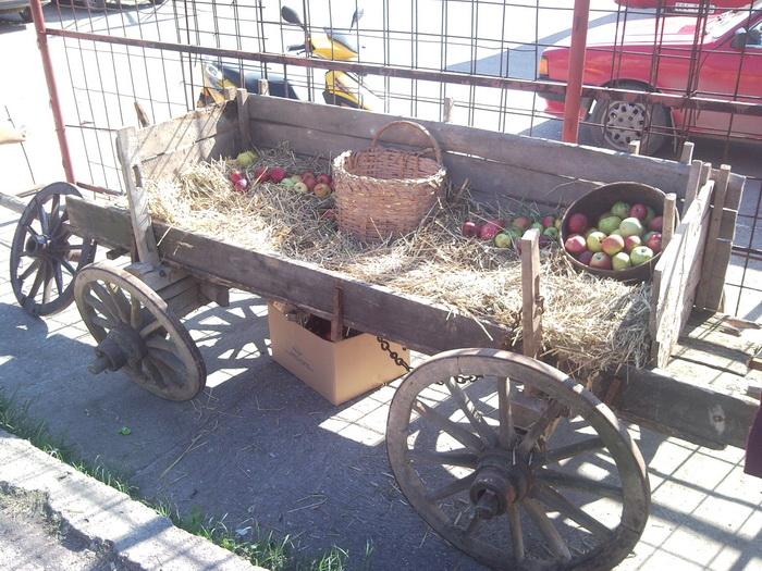 Pregedate slike iz članka: Dan jabuke 2010!