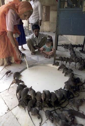 Pregedate slike iz članka: Samo u Indiji