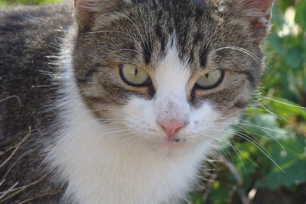 Pregedate slike iz članka: A sada - maca